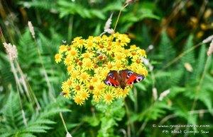 Butterfly #1-0662
