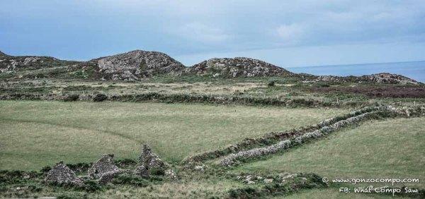 Maes Y Mynydd #1-0673