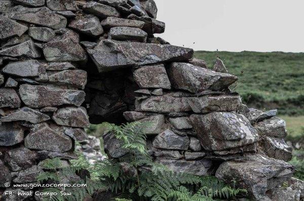 Maes Y Mynydd #6-0755