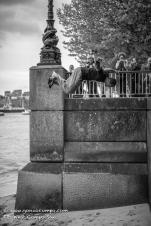 Beau highboard backflip #3